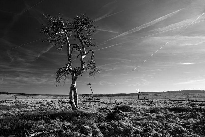 Hohes Venn in Schwarz und Weiß - 5 von Edwin van Wijk