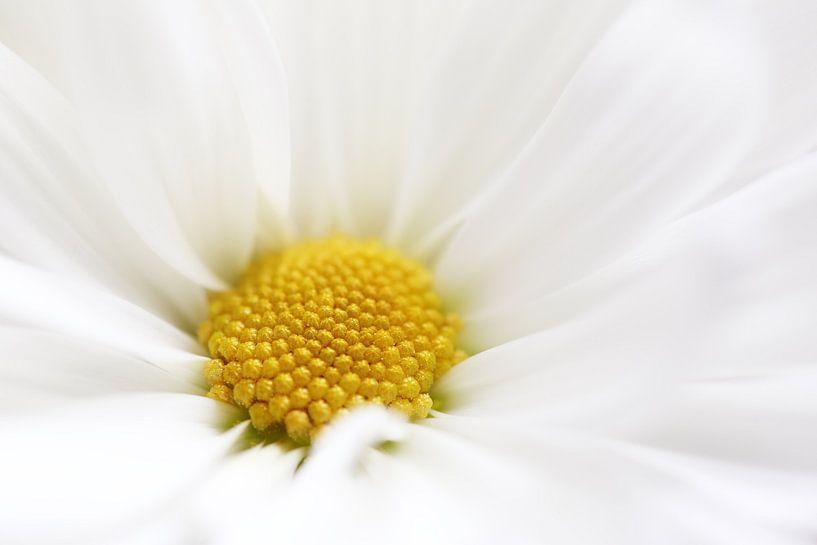 Gorgeous White van LHJB Photography