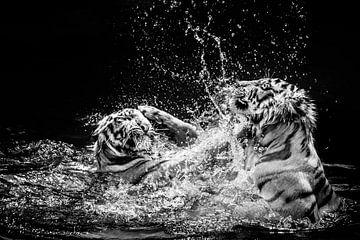 Tiger von Günter Albers