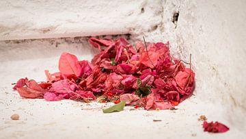 Bougainvillea Blätter auf Stufen in Griechenland von