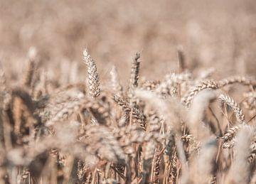 Getreide von Bas Van der Swaluw