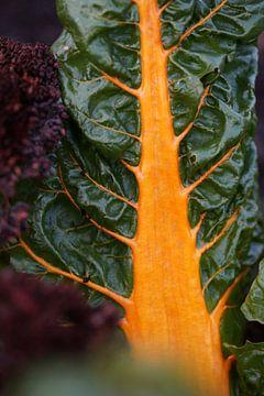 Groenten in de moestuin - Felgekleurde snijbiet van Daan Hartog