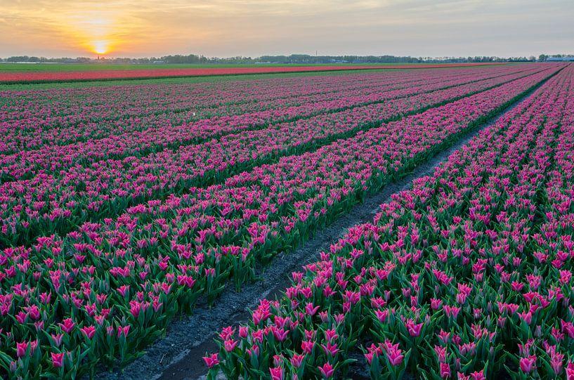 Tulpen von Rene Mensen