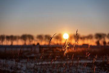 Lever de soleil entre les arbres à Walcheren sur Percy's fotografie
