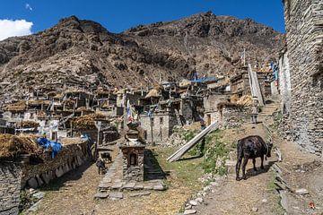 Dorf Phu im Himalaja-Nepal von Tessa Louwerens