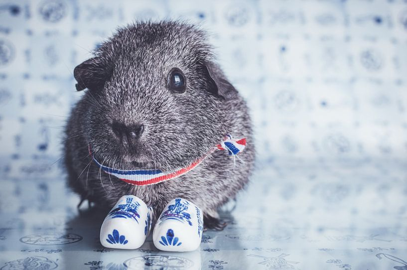 Little guinea pig van JBfotografie - jacindabakker.nl