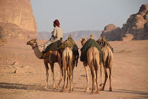 Kamelen in de woestijn van Jordanië van Chantal Schutte