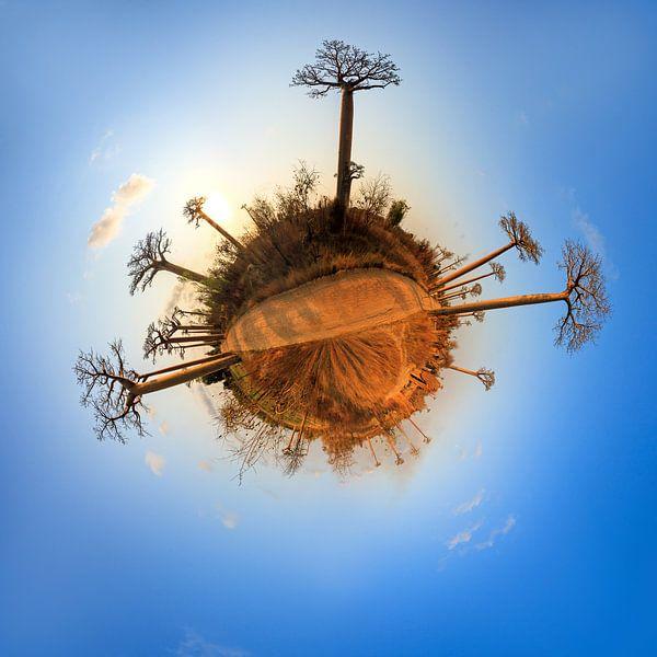 Planeet Baobab van Dennis van de Water