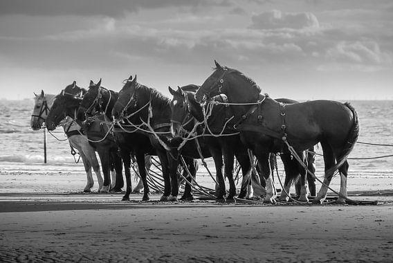 Paarden voor de reddingsboten