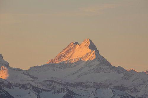 Sonnenaufgang am Schreckhorn mit Alpenglühen in den Berner Alpen