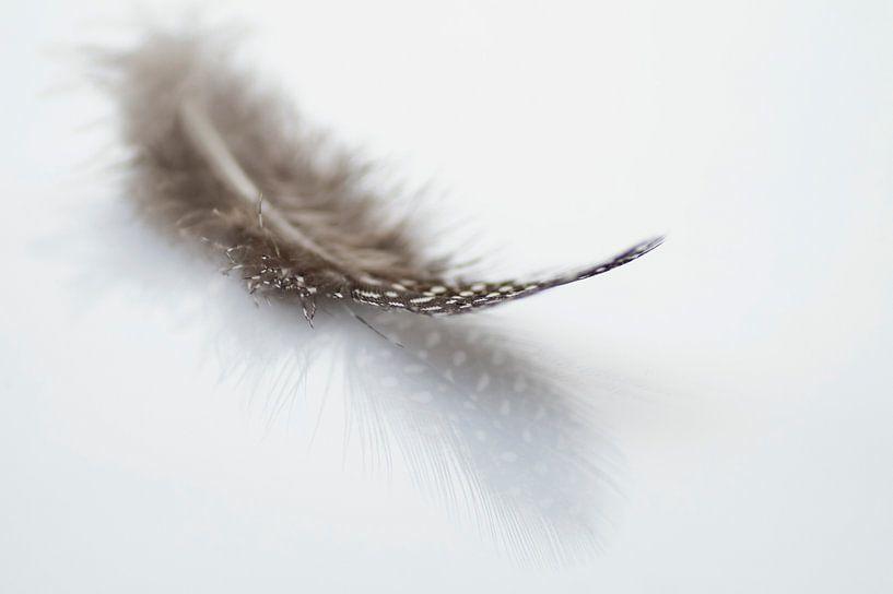 Feather 2 van Birgitte Bergman