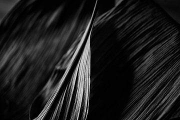 bladschot van Petra Dreiling-Schewe