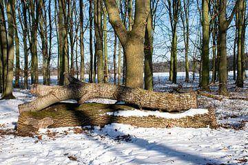 boomstammen in de sneeuw van Ingrid de Vos - Boom