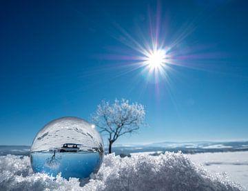 Winterlandschap in een glazen bol van Animaflora PicsStock