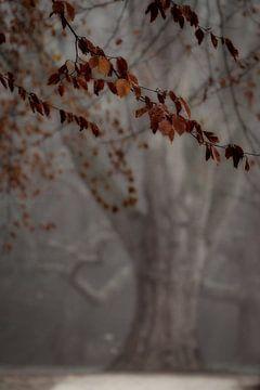 Geisterbaum von Rik Verslype