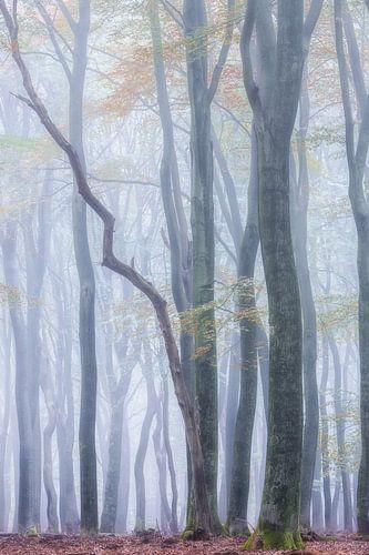 Dansende bomen Speulderbos van Jurjen Veerman