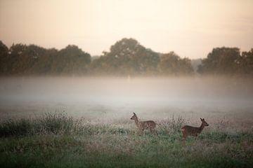 Hirsche im Morgenlicht von Wilco & Casper