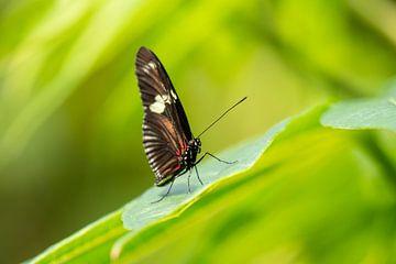 Vlinder in het groen van A. van der Burg