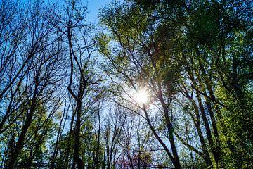 Bomen en zonlicht von Jane Changart