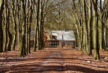 Vervallen huis in het Deelerwoud von Artelier Gerdah