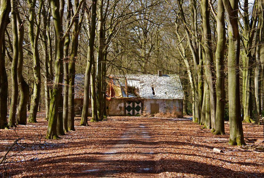 Vervallen huis in het Deelerwoud