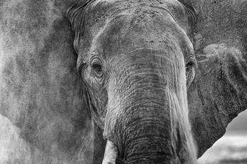 Staubiger Elefant von Anja Brouwer Fotografie