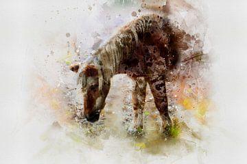 Das Pferd von Claudia Evans