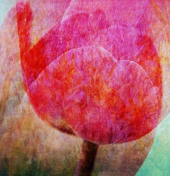 tulpen van Hugo Kuijper