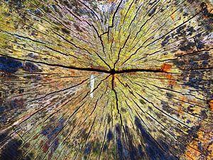 TreeScape 05 van MoArt (Maurice Heuts)