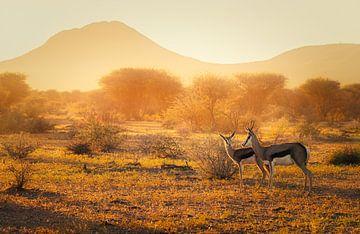 Het gouden licht van Joris Pannemans - Loris Photography