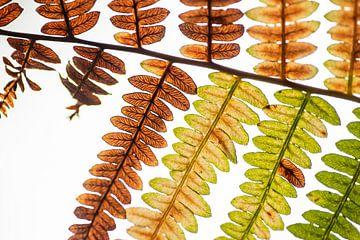Kleuren in een varenblad van Ron Poot
