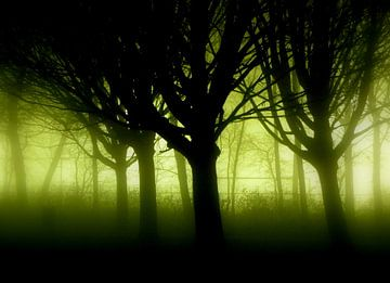 Mystery trees sur Dirk Jan Kralt