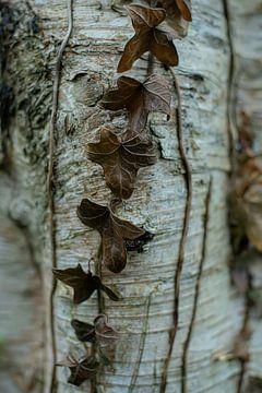 Baum von Piotr Aleksander Nowak