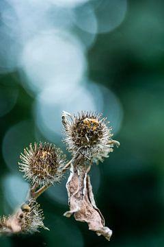 Blühende Distel von Marianne Rouwendal