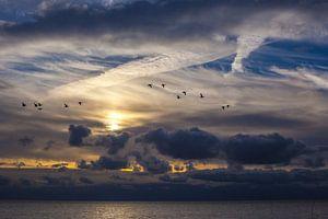 Ganzen boven de zee van Texel van
