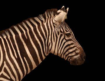 Portret van een zebra in zwart wit van Marjolein van Middelkoop