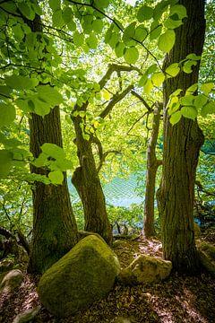 Bäume am See von Martin Wasilewski