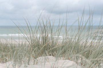 Nederlandse duinen van DsDuppenPhotography