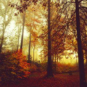 herfst boskleuren van