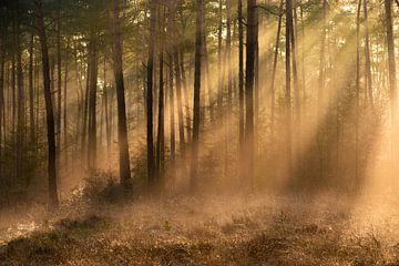 Zonlicht in mistig bos