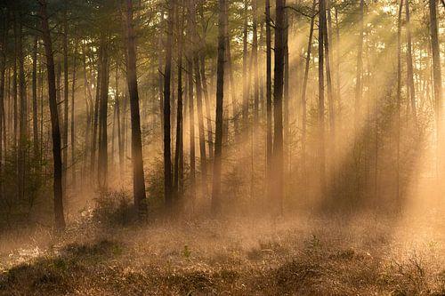 Lumière du soleil à travers le brouillard dans la forêt