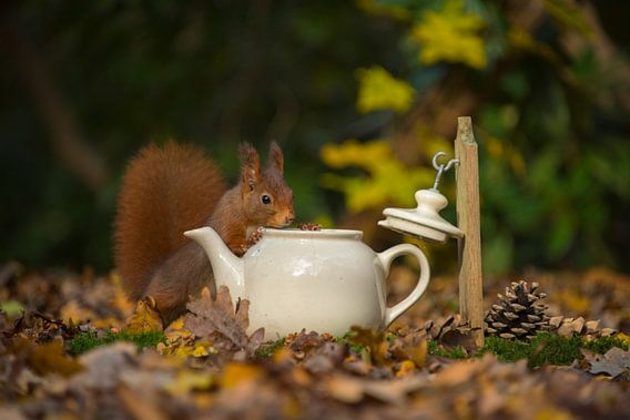 Eekhoorn komt op de thee.
