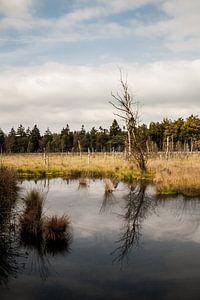 Plas in natuurgebied sur Chris Tijsmans