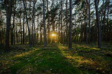 Coucher de soleil à couper le souffle dans les bois de Limbourg avec les rayons du soleil entre les