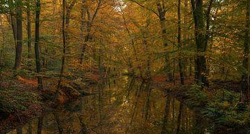 Réflexion d'automne sur Joris Pannemans - Loris Photography