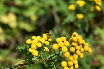 Biene bei der Arbeit von Marcel Ethner