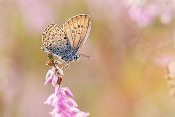 Heideblauwtje in pasteltinten van Roosmarijn Bruijns