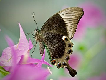 Vlinder close up van Dick Besse
