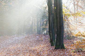 Wandelen door een herfst schilderij sur