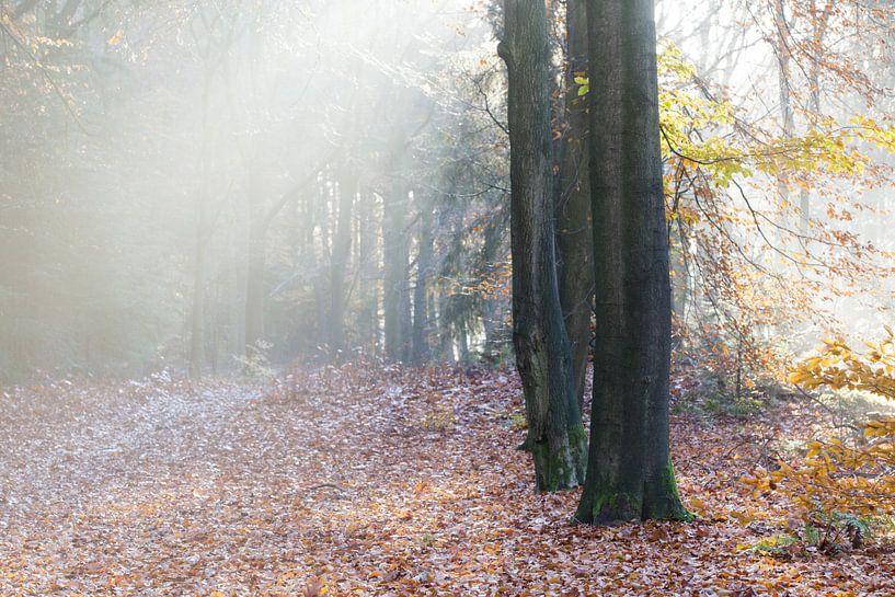 Wandelen door een herfst schilderij sur Hans Koster